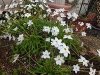 春のガーデン