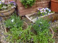 ガーデン春